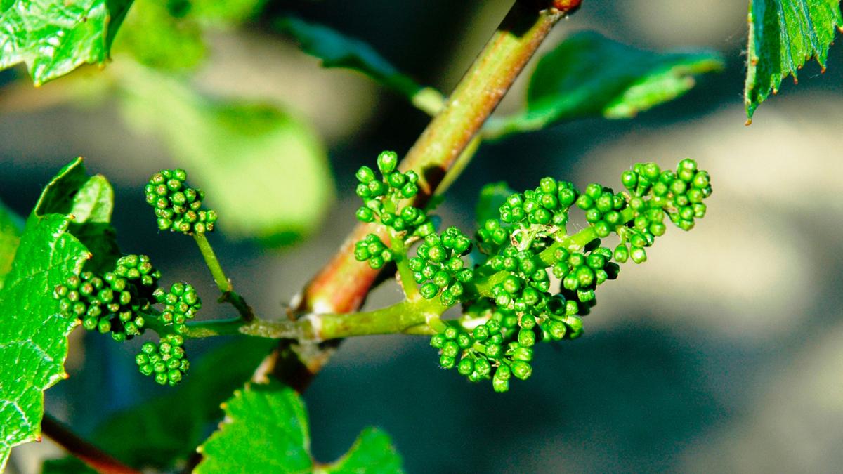 Du Vin Tonnerrois Chablis Escales En Bourgogne